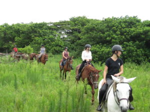 Group riding horses through bush and fields