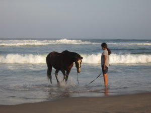 Girl and horse standing in sea