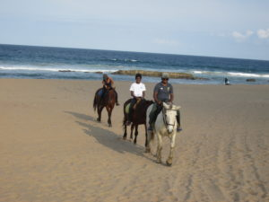 Group of people riding horses on beach