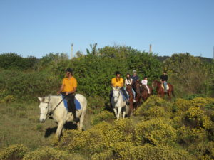 Group riding though wild flowers on a bush trail