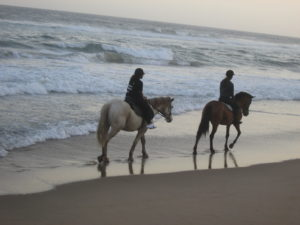 Two horses and riders on the edge of the beach riding into the sunset